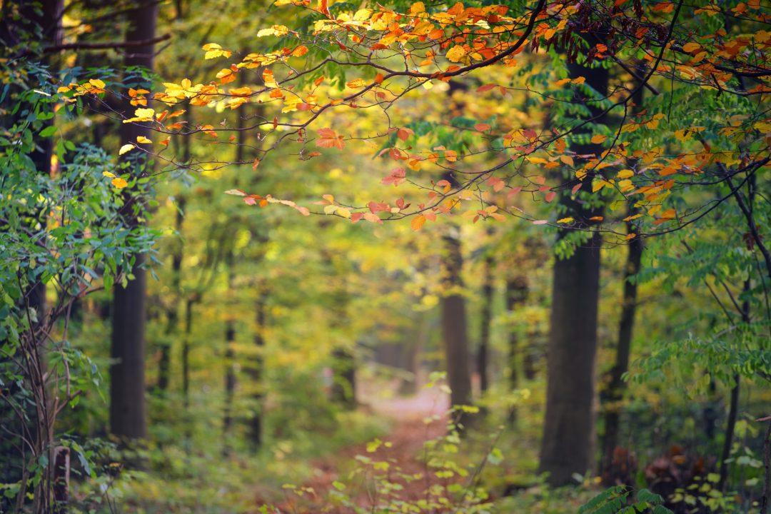 mental health in autumn